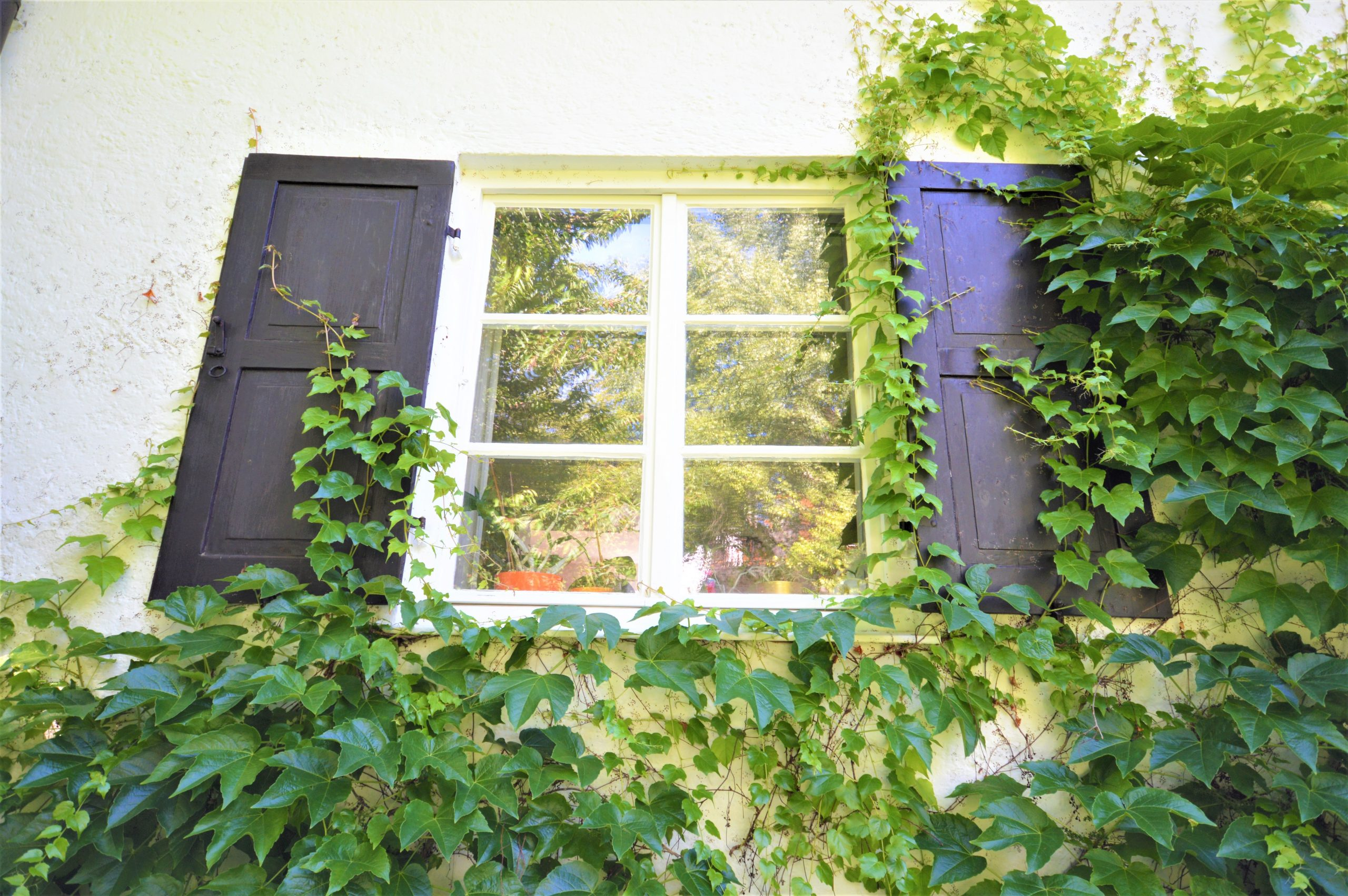 Sprossenfenster mit Fensterläden